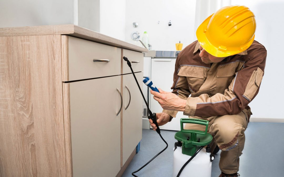 6 Questions You Should Ask your Pest Control Company