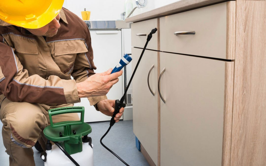 6 Important Things in Pest Control and Extermination | Pest Control  Singapore