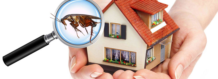 Integrated Pest Control for Corporate Buildings in Singapore