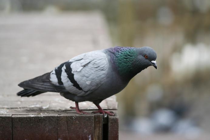 Keep the Birds Away in Humane Way