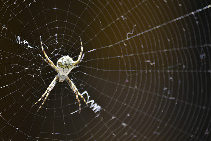 Spider Control in Several Effective Ways